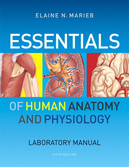 Human Anatomy Physiology 7th Edition L Avvoltoioepub