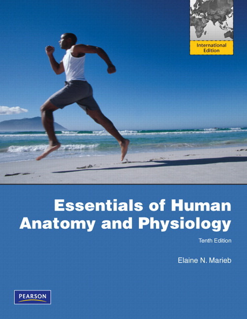 Human physiology and anatomy write up Term paper Service eypaperspcj ...